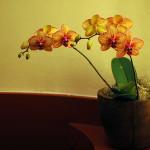 Jak často hnojit květiny