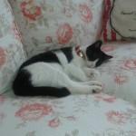 Jak pečovat o domácí kočku