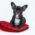 Jak odnaučit psa tesknit